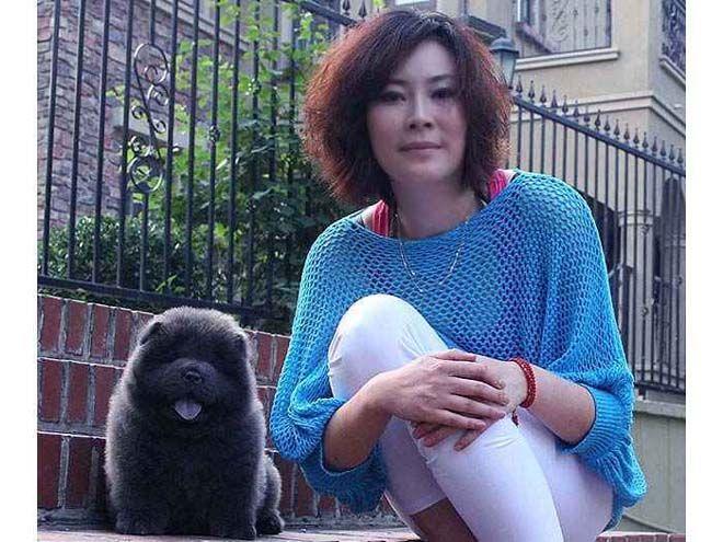 文文和松狮幼犬母蓝色松狮犬图片