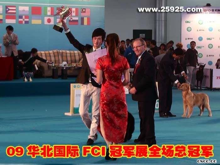 09年FCI华北全犬种国际冠军展松狮犬黑牛获全场总冠军BIS
