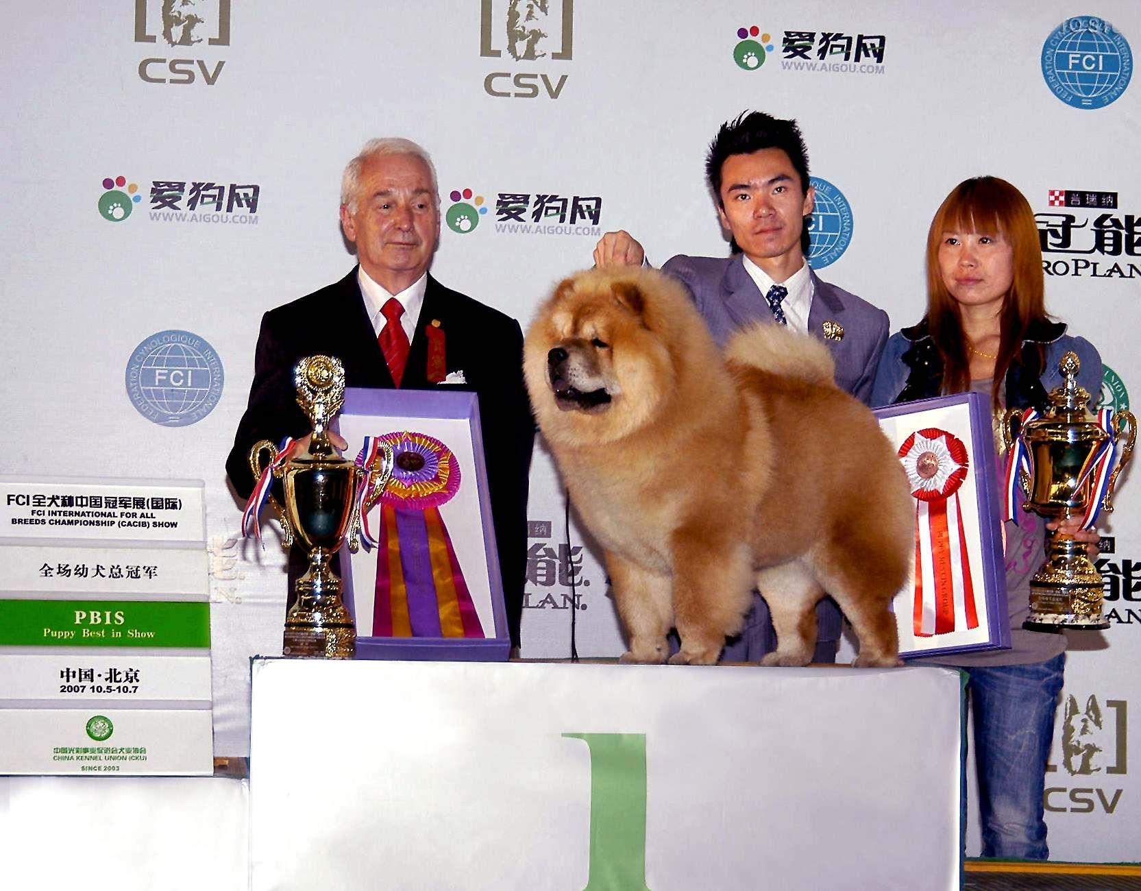 HOPE获FCI中国冠军展(国际)全场幼犬总冠军BIS