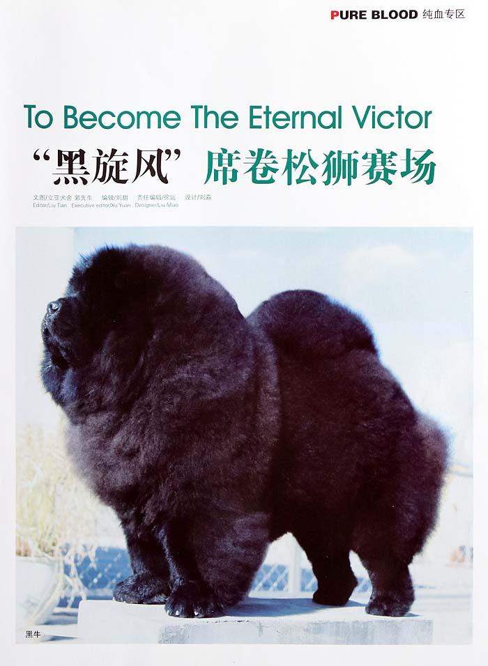 宠物杂志备案-黑旋风席卷松狮赛场-杂志图片1